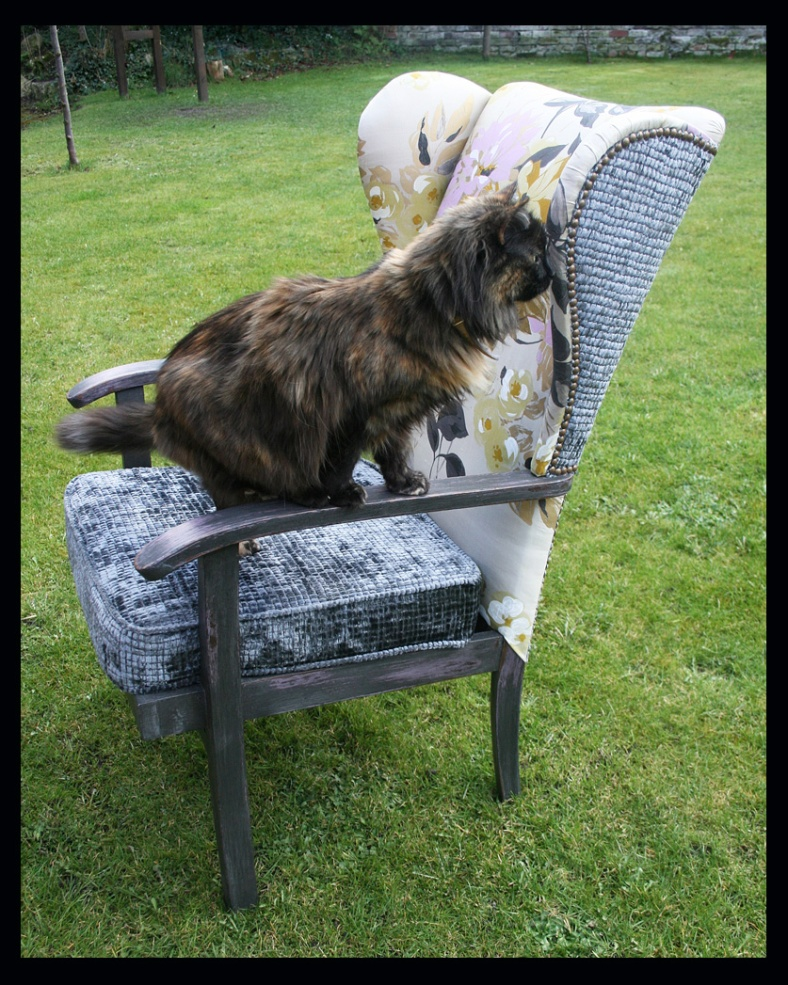 Cat on a re-upholstered wingback Parker Knoll chair