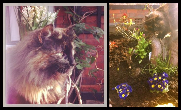 Missy-Garden-Apr13
