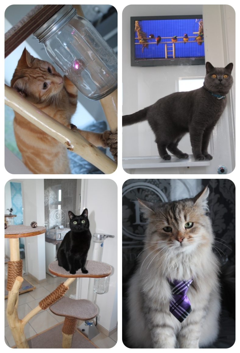 The Ings Luxury Cat Hotel Yorkshire
