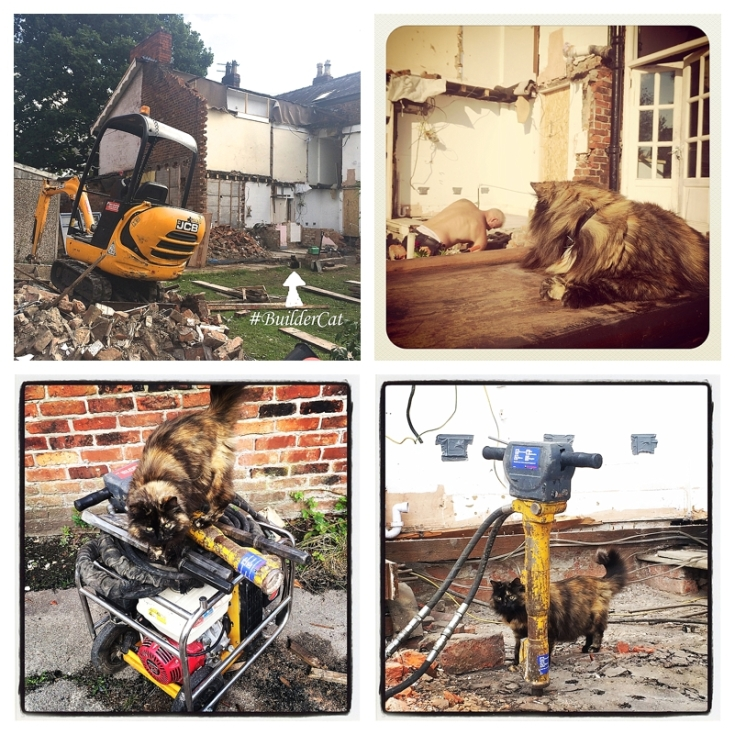 Cat on building site