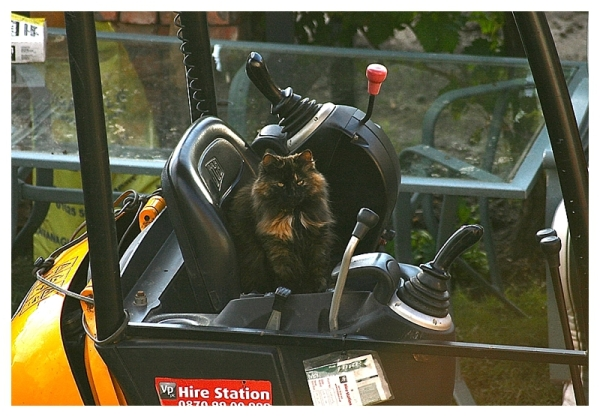 Cat on mini-digger on building site
