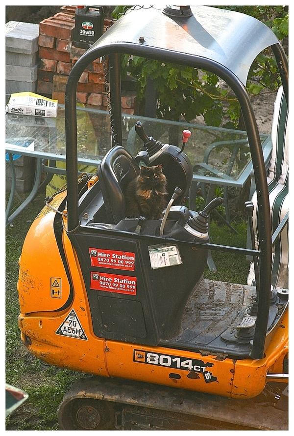 Cat sitting on mini-digger on building site