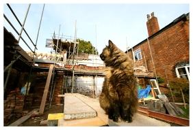 Builder Cat on building site