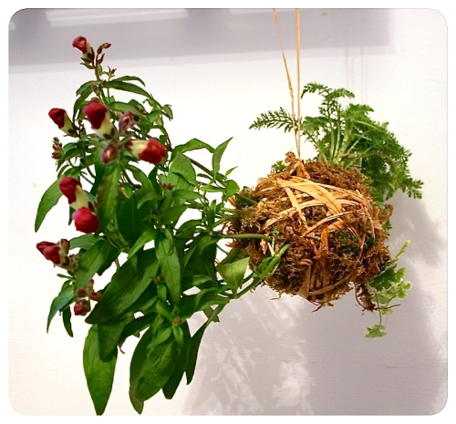 How to make Kokedama Moss Balls 1