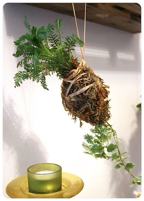 How to make Kokedama Moss Balls 2