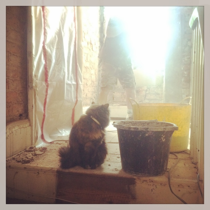 Missy Builder Cat in the midst of re-plastering