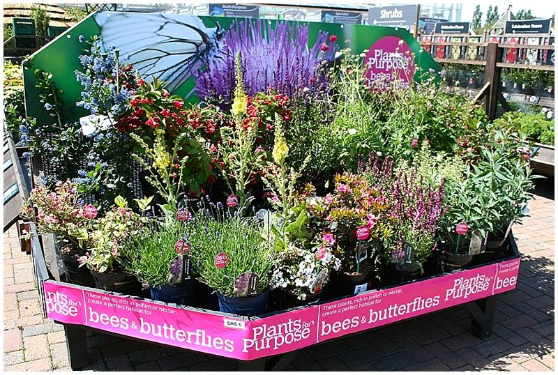 How to create a buzzingly beautiful bee friendly garden for How to create a garden