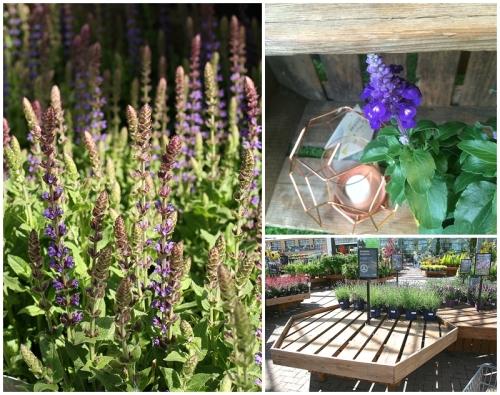Purple Bee Friendly Plants in Moregeous garden space