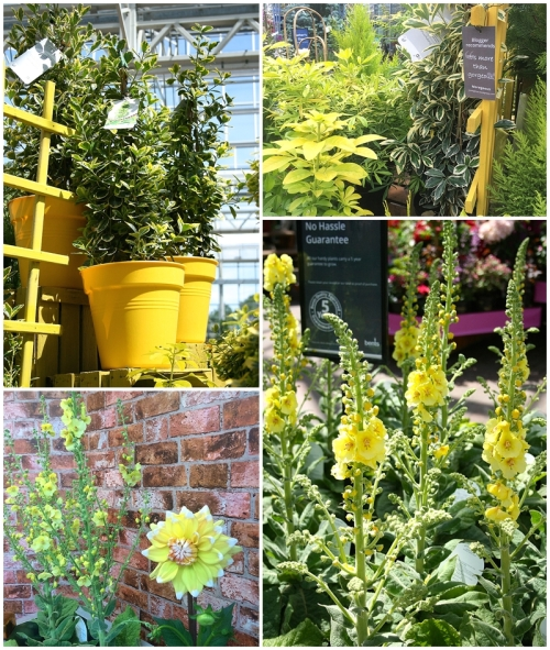 Yellow Bee Friendly Plants in Moregeous garden space