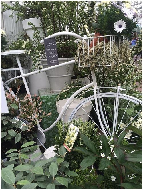 Grey in garden 2