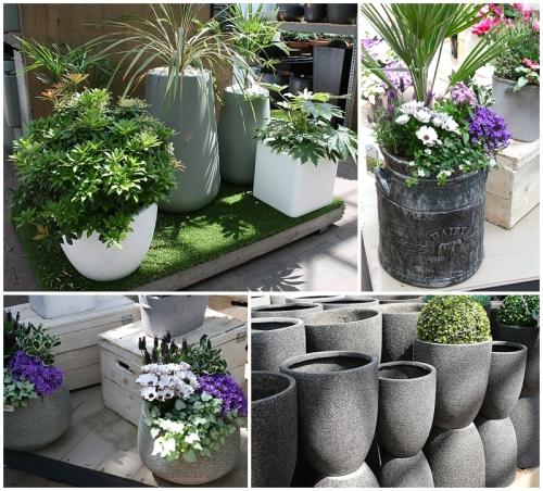 Grey in garden 4
