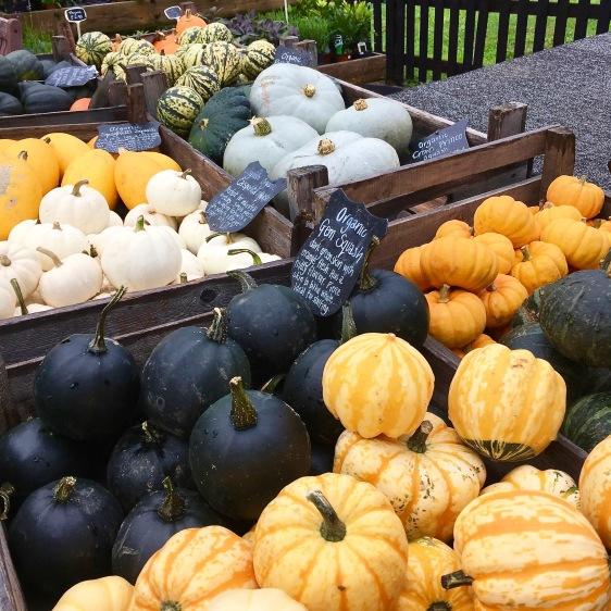 autumn-squash
