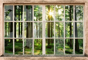 sunset-in-forest-through-broooken-window