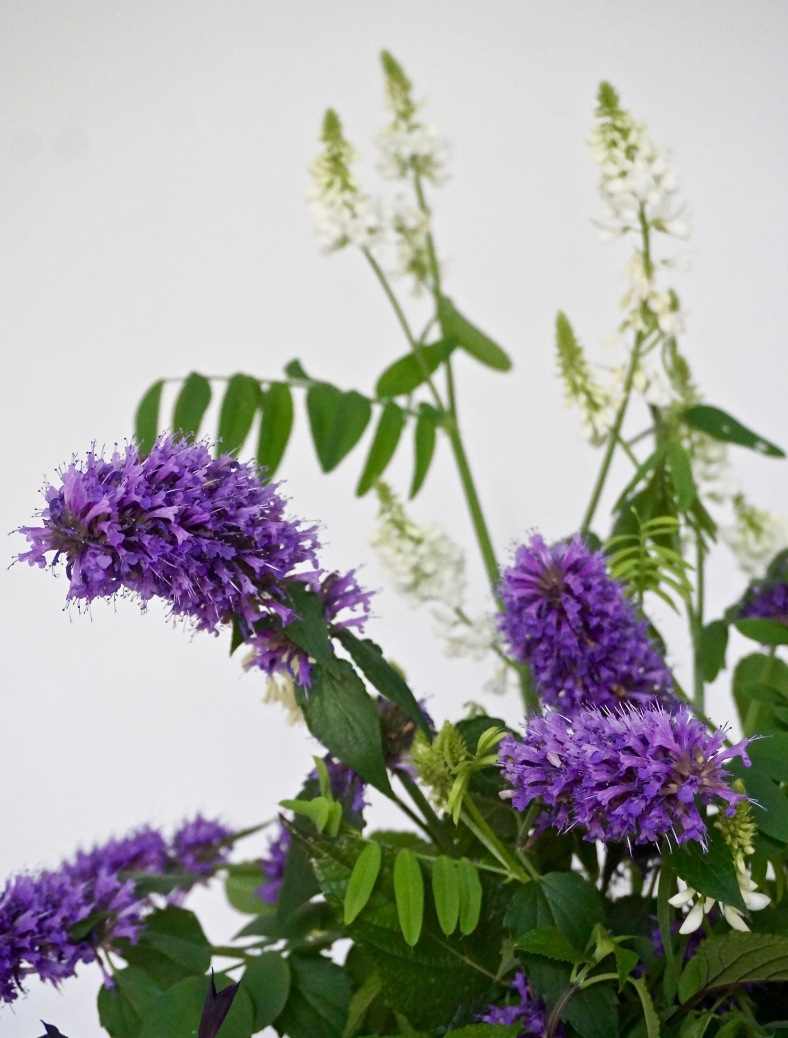 Cut flowers Agastache