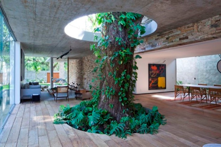stunning-indoor-tree-and-climbing-plant-idea-also-natural-wood-floor-and-contemporary-dining-room-chairs